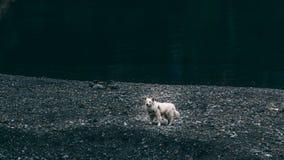 Lustiger weißer Hund, der oben stark steht stockfotos