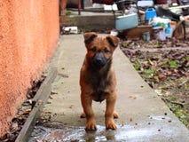 Lustiger Welpe, der Knochen isst und Kamera betrachtet Nettes kleines Haustier Inländischer Hund im Hinterhof Stockfotos