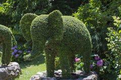 Lustiges Bild einer Elefant-förmigen Hecke stockfoto