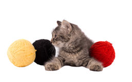 Lustiges braunes Kätzchen und Bälle des Threads Stockfotografie