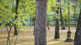 Lustiges Eichhörnchen, das in einem Baum im Park spielt stock video