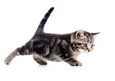 Lustiges gehendes Kätzchen der schwarzen Katze auf Weiß Stockfotos