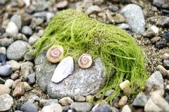 Lustiges Gesicht mit Stein, Alge und Seashells Lizenzfreie Stockfotografie