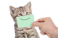 Lustiges glückliches junges Katzenporträt mit Lächeln auf der grünen Pappe lokalisiert auf Weiß lizenzfreies stockfoto