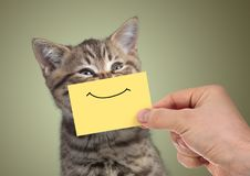 Lustiges glückliches junges Katzenporträt mit Lächeln auf Pappe stockfotografie