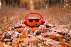 Lustiges Halloween Kürbis in der Sonnenbrille im Herbst Park lizenzfreie stockbilder