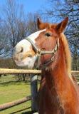Lustiges junges Pferd Stockbild