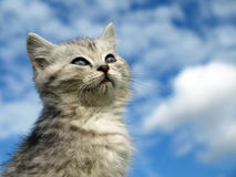 Lustiges Kätzchen Lizenzfreie Stockfotografie