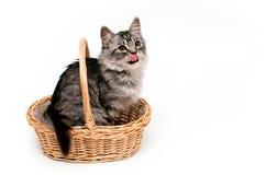 Lustiges Kätzchen Stockbilder