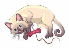 Lustiges Kätzchen stockbild