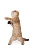 Lustiges Kätzchen Lizenzfreie Stockfotos