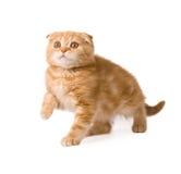 Lustiges Kätzchen Stockfotos