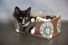 Lustiges Kätzchen im Gewebe-Kasten Lizenzfreies Stockfoto