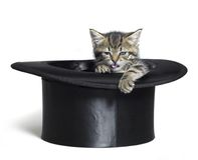 Lustiges Kätzchen im Zylinder Stockfotografie