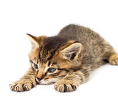 Lustiges Kätzchenisolat im Weiß Stockfoto