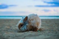 Lustiges Kaninchen in den Strandhaustieren stockbild