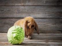 Lustiges Kaninchen mit Kohl Lizenzfreie Stockfotografie