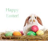 Lustiges Kaninchen und Ostereier Stockfotos