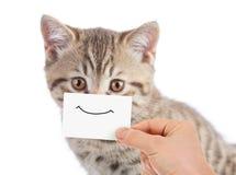 Lustiges Katzenporträt mit Lächeln auf Pappe lizenzfreies stockbild