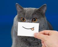 Lustiges Katzenporträt mit Lächeln stockfotografie