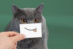 Lustiges Katzenporträt mit Lächeln und der Zunge lizenzfreie stockbilder