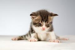 Lustiges kleines Kätzchen Stockfotografie