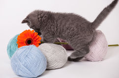 Lustiges kleines Kätzchen lizenzfreie stockfotos