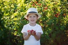 Lustiges Kleinkind, das rote Johannisbeeren vom Korinthenbusch in einem Garten aufhebt Lizenzfreie Stockfotos