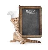 Lustiges Kätzchen in der Kochhutholding-Menütafel Stockfotos
