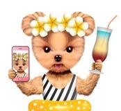 Lustiges nehmendes Tierselfie im Bikini mit Cocktail Lizenzfreies Stockbild