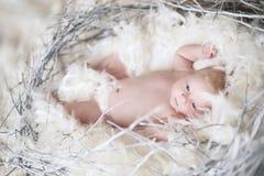 Lustiges neugeborenes Baby mit weißer Feder in Nest Porträt von adora Stockfotografie