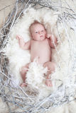 Lustiges neugeborenes Baby mit weißer Feder in Nest Porträt von adora Lizenzfreie Stockbilder