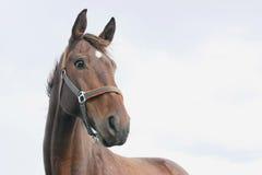 Lustiges Pferd mit Himmel im Hintergrund Lizenzfreie Stockfotografie