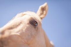 Lustiges Pferdenahaufnahmeporträt lizenzfreies stockbild