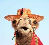 Lustiges Porträt des Kamels mit Hut Lizenzfreies Stockbild
