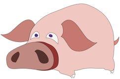 Lustiges Schwein Stockfotografie