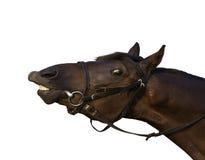 Lustiges tan Pferd Stockfotos