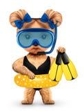 Lustiges Tier in der Tauchmaske und -Schwimmring Lizenzfreies Stockbild