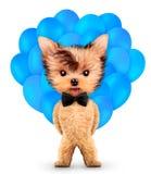 Lustiges Tier halten ein Bündel Ballone Stockfotos