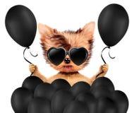 Lustiges Tier umgeben durch ballloons Stockfoto
