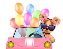 Lustiges Tiersitzen in einem Auto Lizenzfreie Stockfotografie