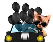 Lustiges Tiersitzen in einem Auto Lizenzfreie Stockbilder