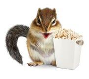 Lustiges Tierstreifenhörnchen mit dem leeren Popcorneimer lokalisiert auf Whit Lizenzfreies Stockbild