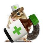 Lustiges Tierstreifenhörnchen mit veterinarianhat Griff-Flasche medicatio Stockfoto
