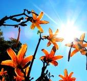 Lustro del fiore Fotografia Stock