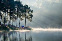 Lustro di luce solare dell'abetaia di punto di vista sul bacino idrico della nebbia nella mattina Immagine Stock