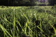 Lustro di Sun su erba bagnata Fotografia Stock