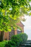 Lustro di Sun tramite le foglie dell'albero Fotografia Stock