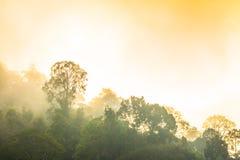 Lustro dorato del cielo comunque la nebbia sopra l'alta montagna Immagini Stock
