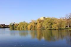 Lustro na jeziorze - wierzbowych drzew odbicie w wodzie Obrazy Stock